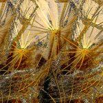 Goatsbeard Seed - Digital Print 13/25