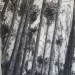 Tall Pine trees against the sky in charcoal