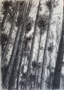 'The Lost Pines of Cally Woods' Charcoal on paper A3