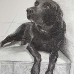 'Nicky' Charcoal on paper A3 (commission)